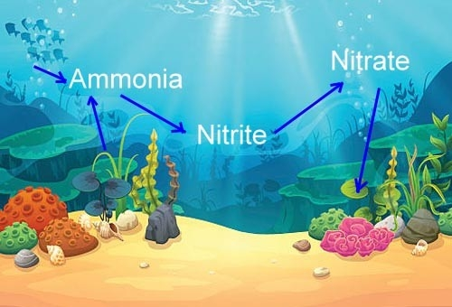 The Fish Guide - The Nitrogen Cycle