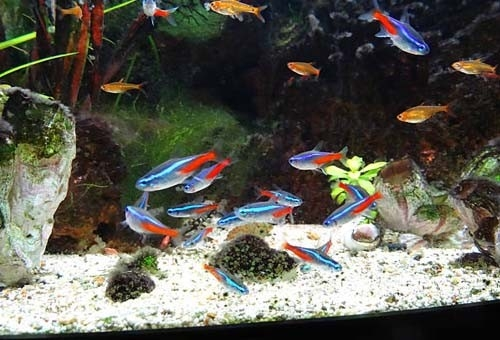 The Fish Guide - Tropical Fish Tank