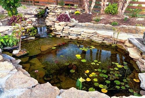 The Fish Guide - garden ponds